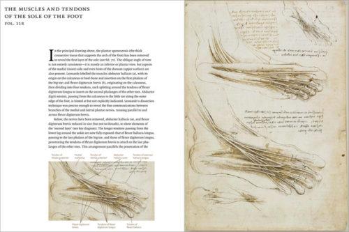 Leonardo da Vinci, Anatomist