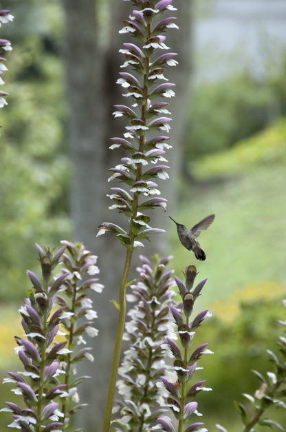 Getty Voices: The Waltz of the Hummingbirds