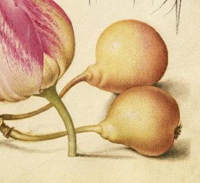 Edible Gardening in the Renaissance