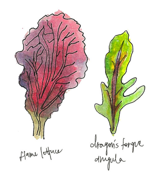The Personalities of Salad Greens, Captured in Watercolors