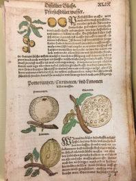 The Origins of Flavored Waters