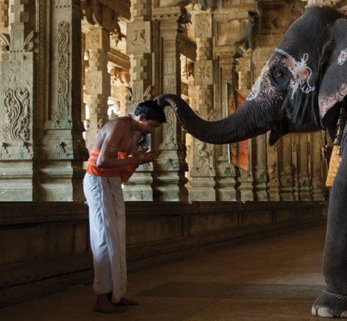 Are India's Elephants Blessed Creatures or Indentured Servants?