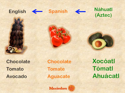 Text graphic showing the Nahuatl, Spanish, and English names for chocolate, tomato, and avocado