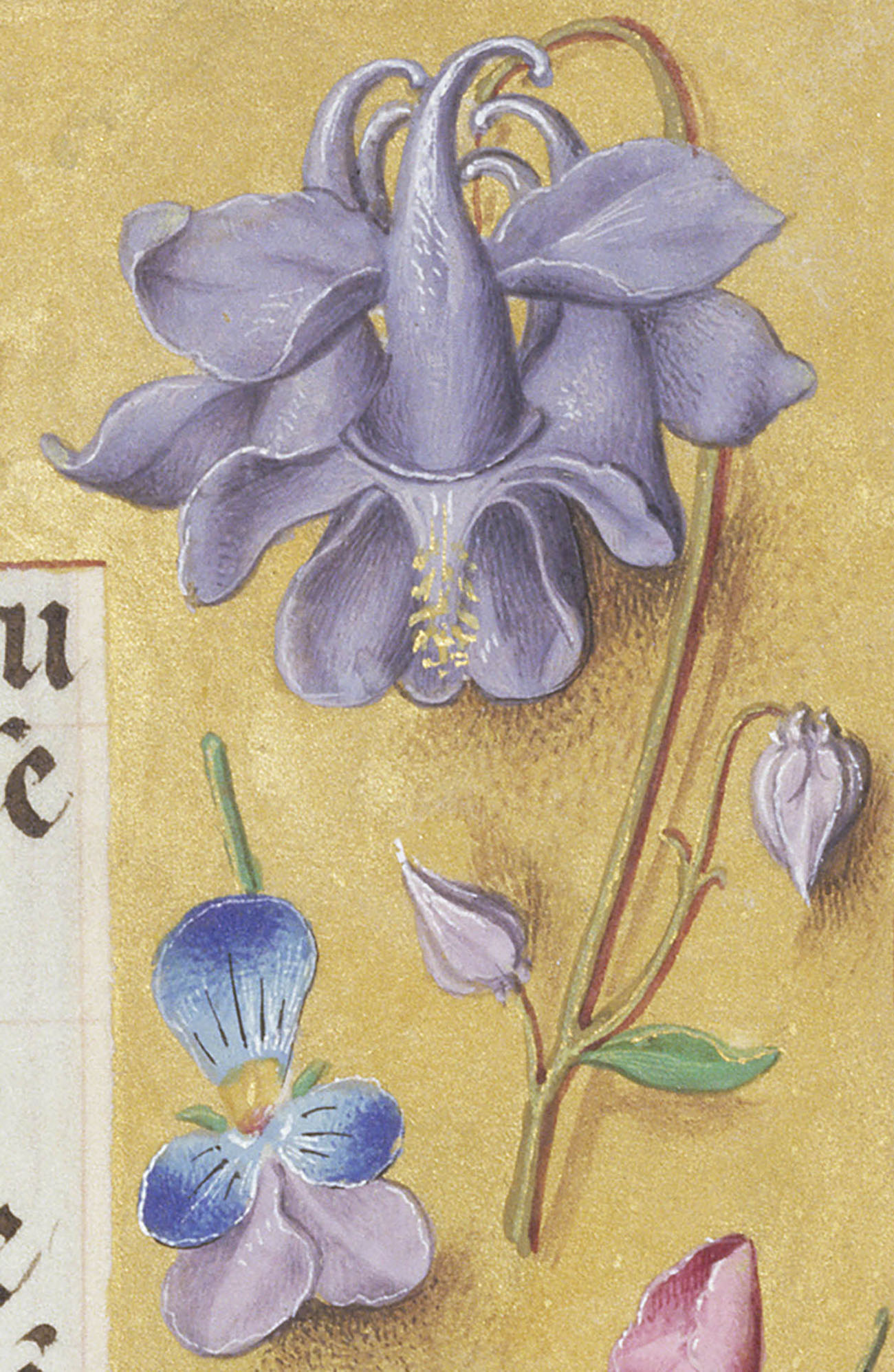 7 favorite flowers from renaissance manuscripts and their christian light purple complext flower found in manuscript illustration izmirmasajfo