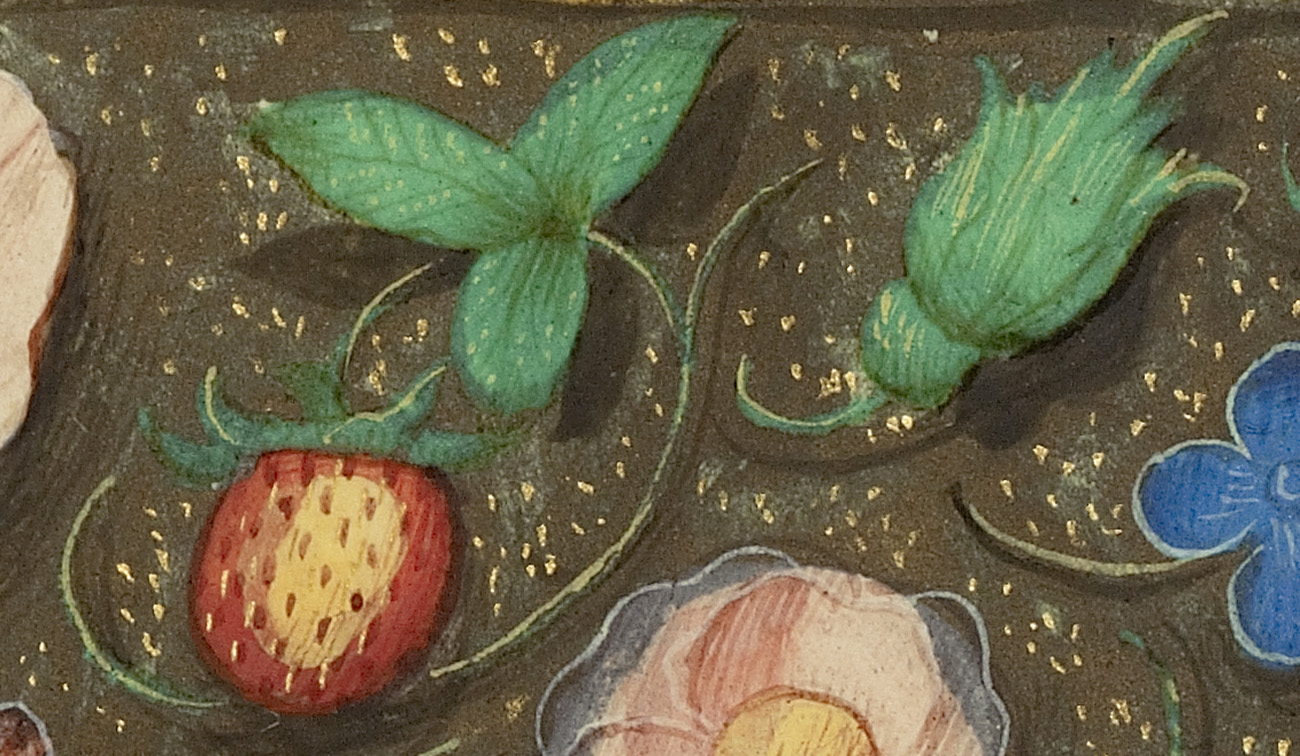 Detail of a strawberry with three leaves from a Renaissance Manuscript