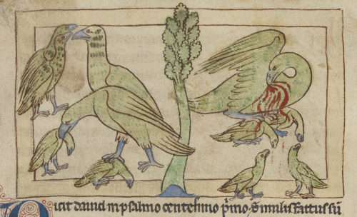 The Pelican, Self-Sacrificing Mother Bird of the Medieval Bestiary