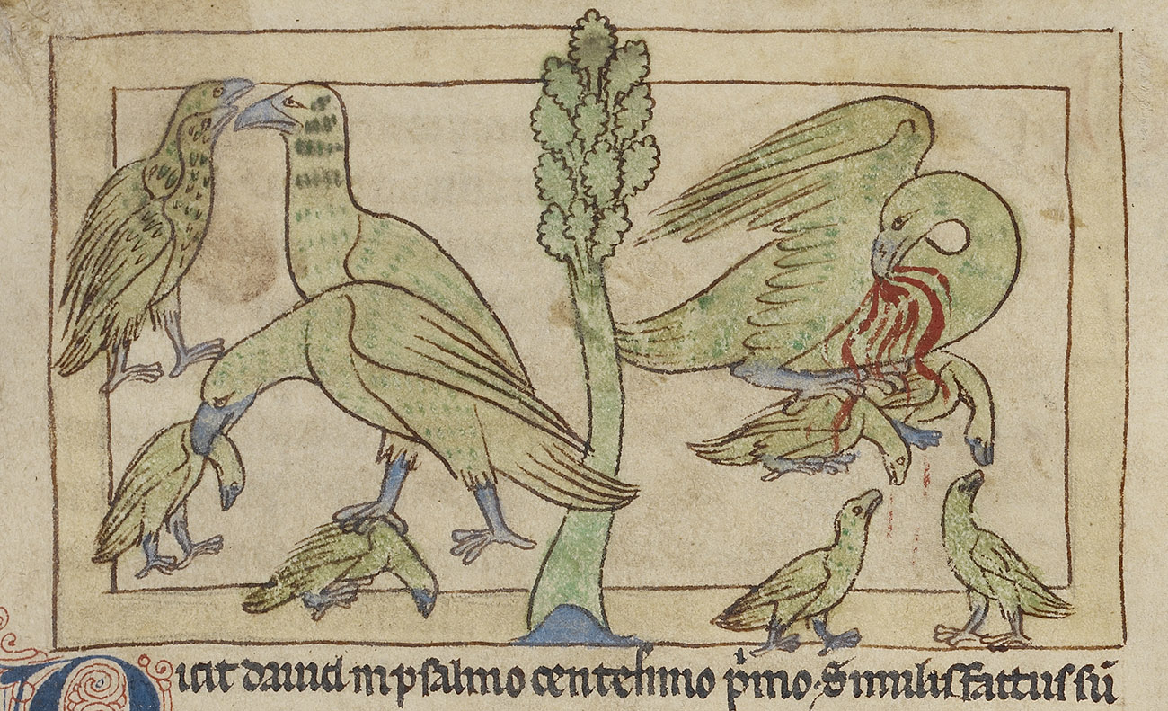 The Pelican Self Sacrificing Mother Bird Of The Medieval Bestiary