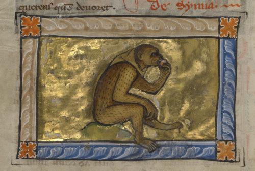 Monkey See, Monkey Do, Monkey Sin