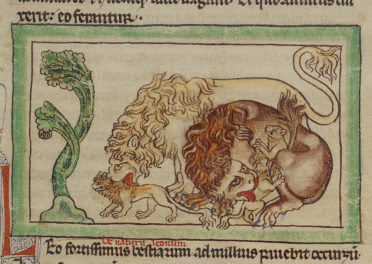 The Laudable Lion of the Medieval Mind