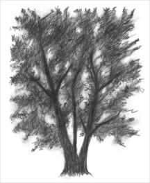 Draw a Tree with Us—It's Easy!