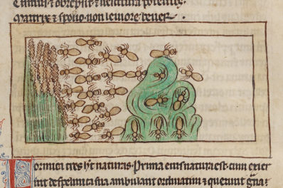 The Monstrous Ant of the Medieval Bestiary