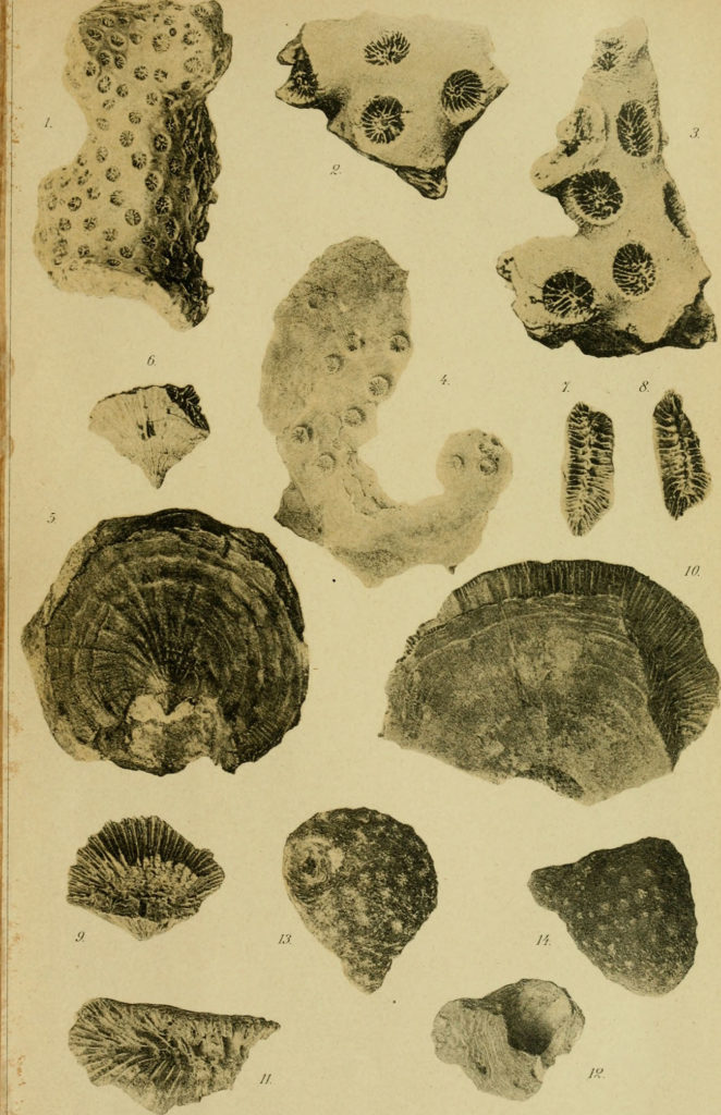 A very old photograph documenting many types of shell specimens form the National Museum of Buenos Aires.