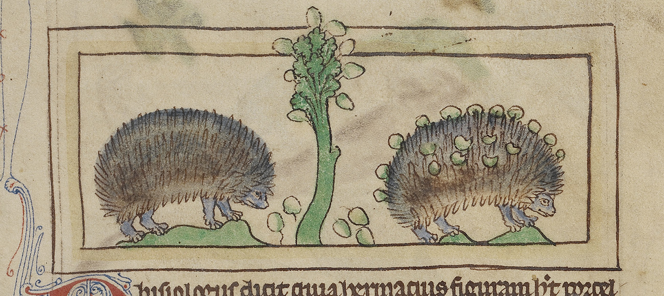 At left, a single hedgehog atop an irregular green mound of earth; at right, single hedgehog on different mound of earth, whose quills are populated with grapes; divided at center by single green, leafy stalk bearing grapes.