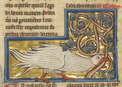 The Caladrius, Harbinger of Hope or Despair