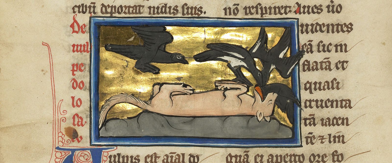 On a grey mound with a gold backdrop, a red doglike fox lies on its back with four black-and-white birds flocking around it