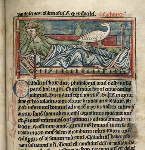 A king wearing a crown, making reference to the caladrius's home in royal courts, looks unfazed that the caladrius brings good news.