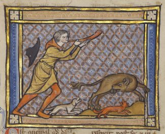 The Treasured Testicles of the Medieval Beaver