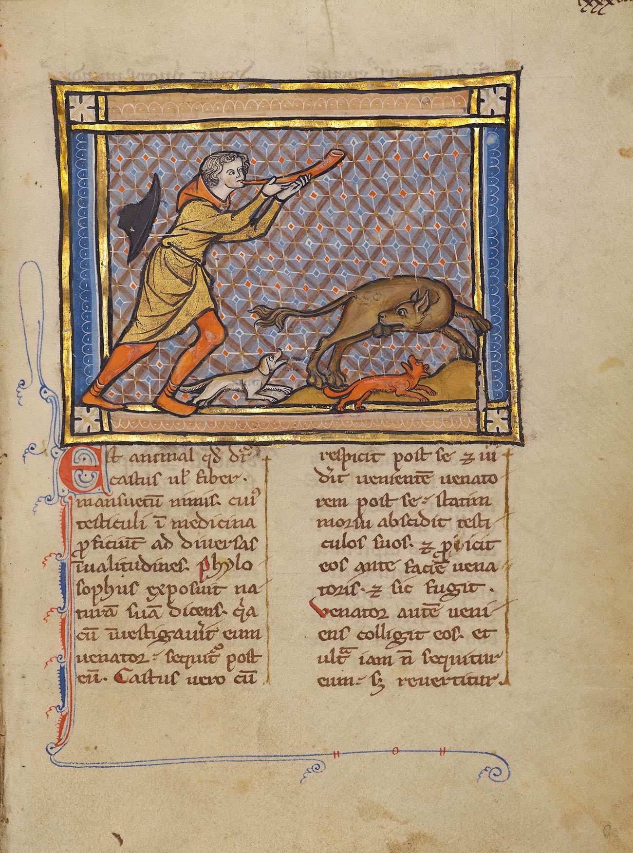 Full page of a manuscript showing a hunter chasing a beaver who is biting off his testicles.