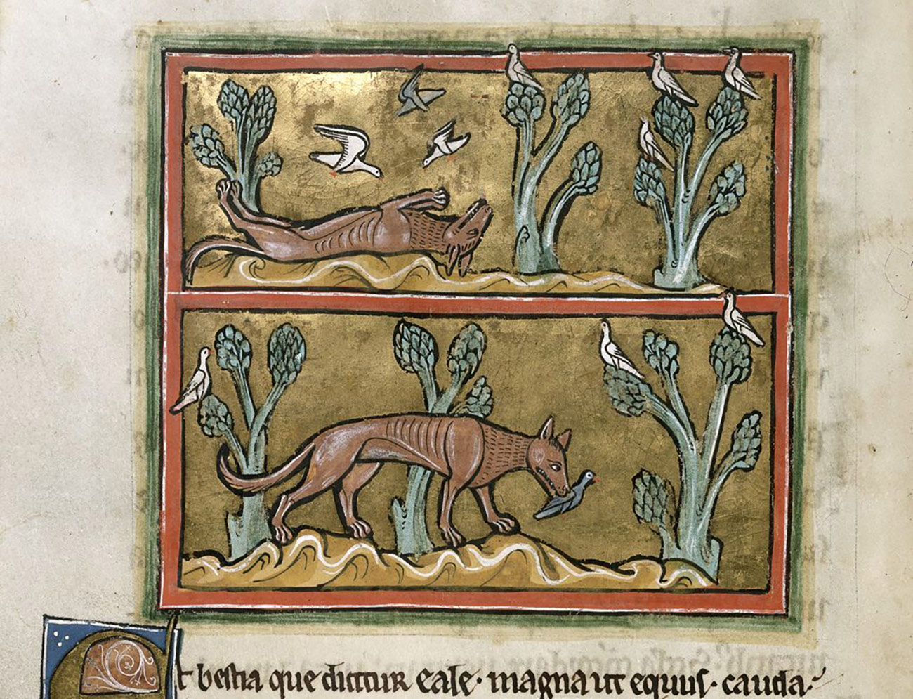 Two scenes depicting the fox. Above, the fox is depicted lying on its back with three birds circling above. Below, the fox is depicted with a bird in its mouth.