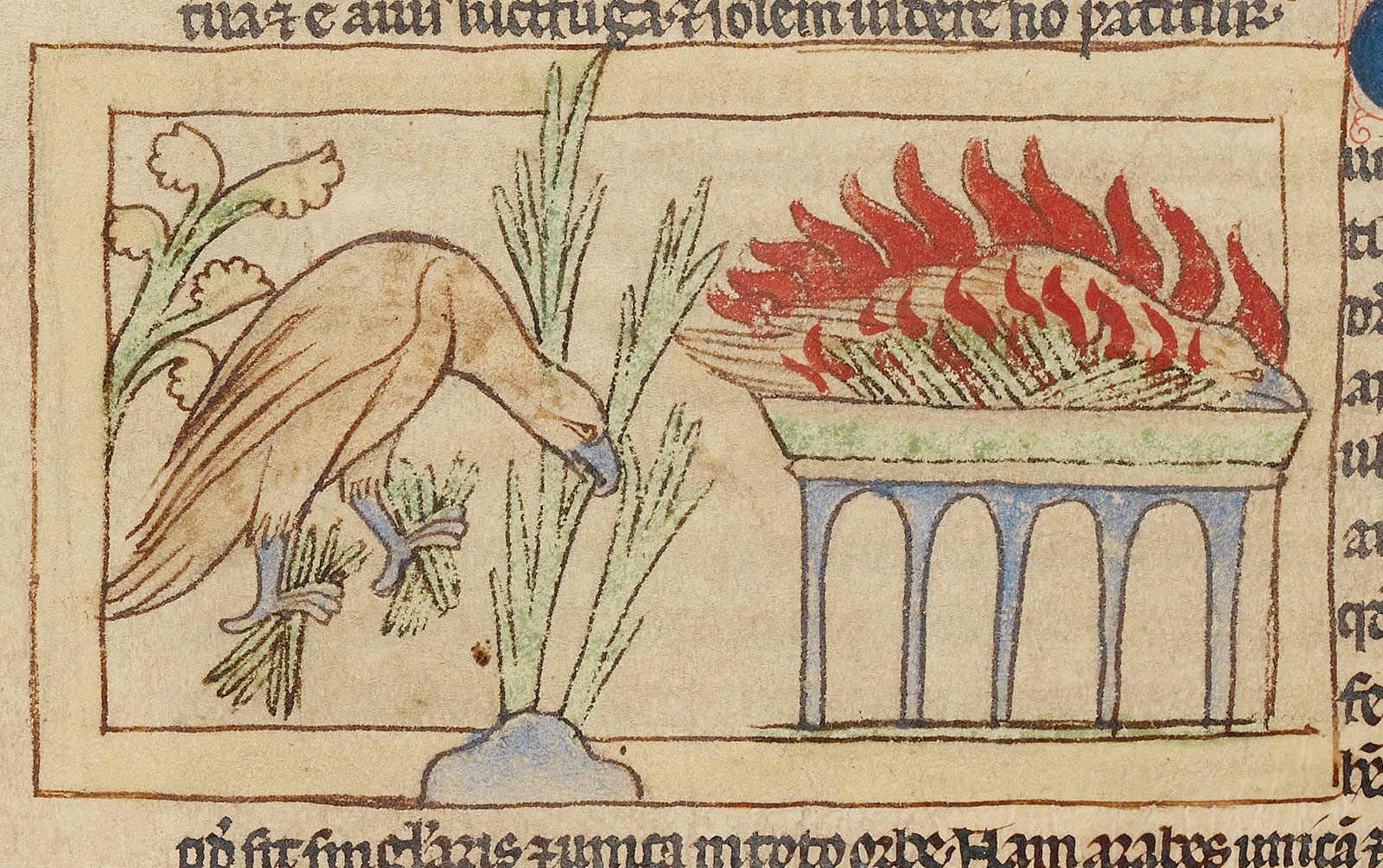 At left, a phoenix bird gathers sweet-smelling plants for its altar. At right, a phoenix burns with a peaceful expression on its face.