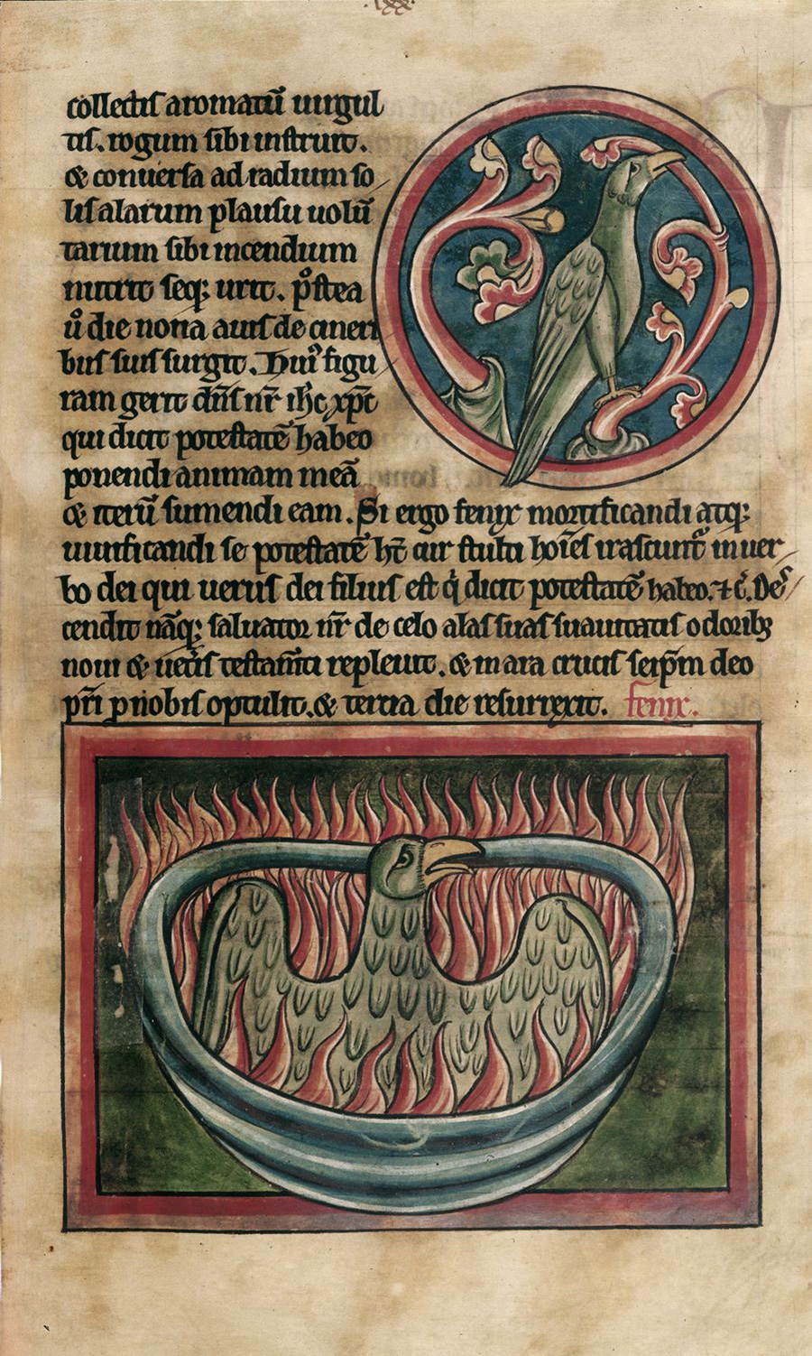 A manuscript page has two depictions of phoenix birds. At top, the bird grasps a branch with its beak. At bottom, the bird sits in a large tub, wings spread, as it goes up in a riot of flames