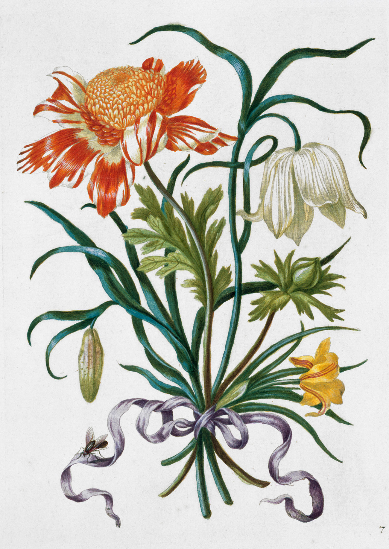 An illustration of three very showy flowers in a bouquet.