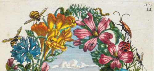 Maria Sibylla Merian, Trailblazing Artist-Scientist of the Seventeenth Century