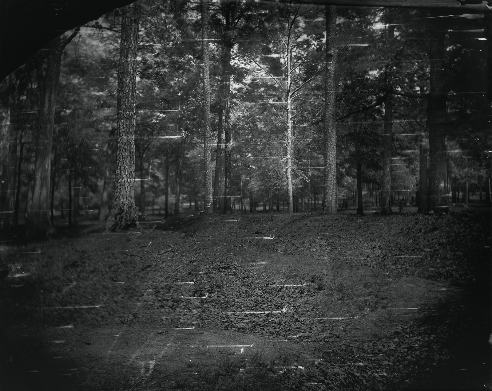 A dark moody photograph of trees in a forest.