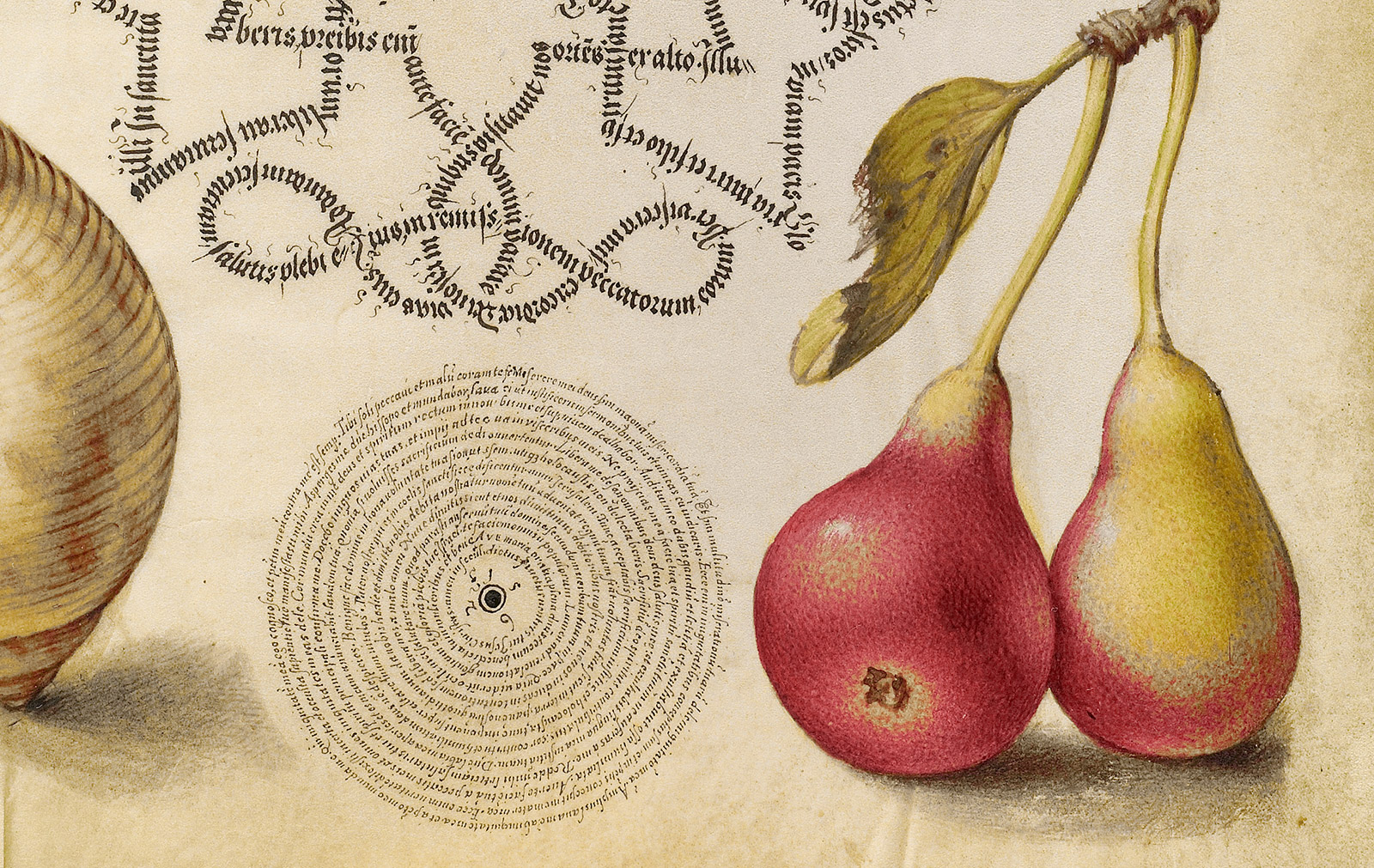 Detail of a manuscript page showing highly realistic painted pears next to intricate calligraphy written in an intricate spiral