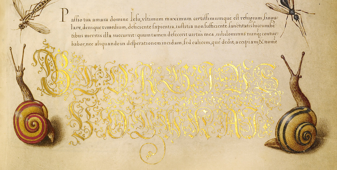 Detail of a manuscript page showing a paragraph of precise handwritten calligraphy, two oversize gold words, and two realistic painted snails
