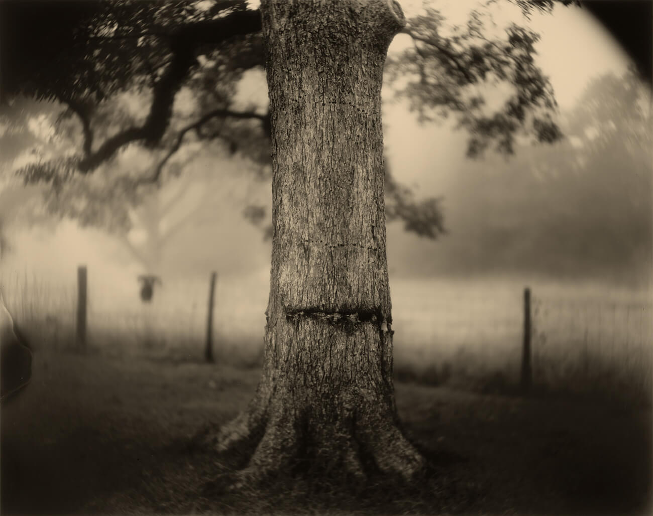 Black and white photo of the trunk of a tree, with a vertical line of damage along the bark.