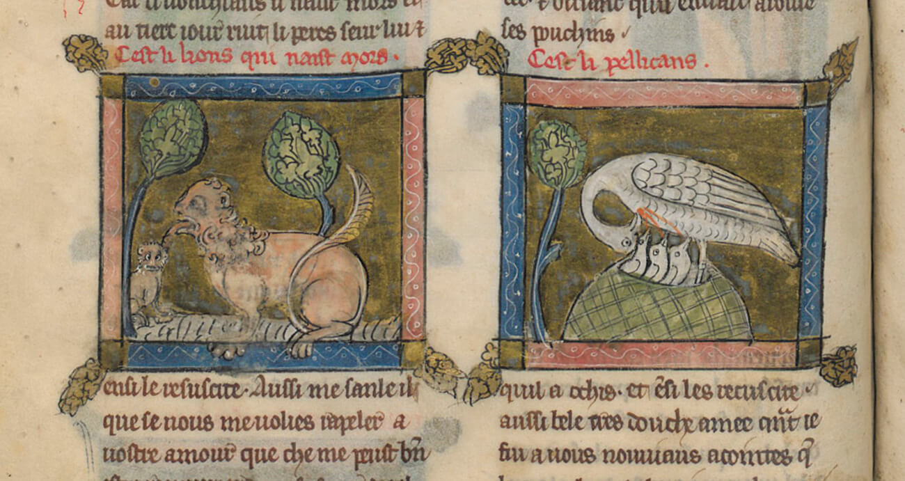 Two pages of an illustrated manuscript. On the left, a lion with a curly mane licks a lion cub under two trees. On the right, a large white bird feeds three young birds beneath it with its own blood.