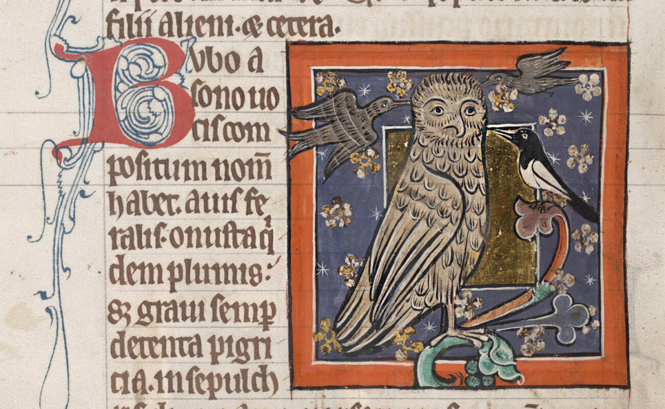 An owl sitting on a branch is pecked aggressively by three smaller birds