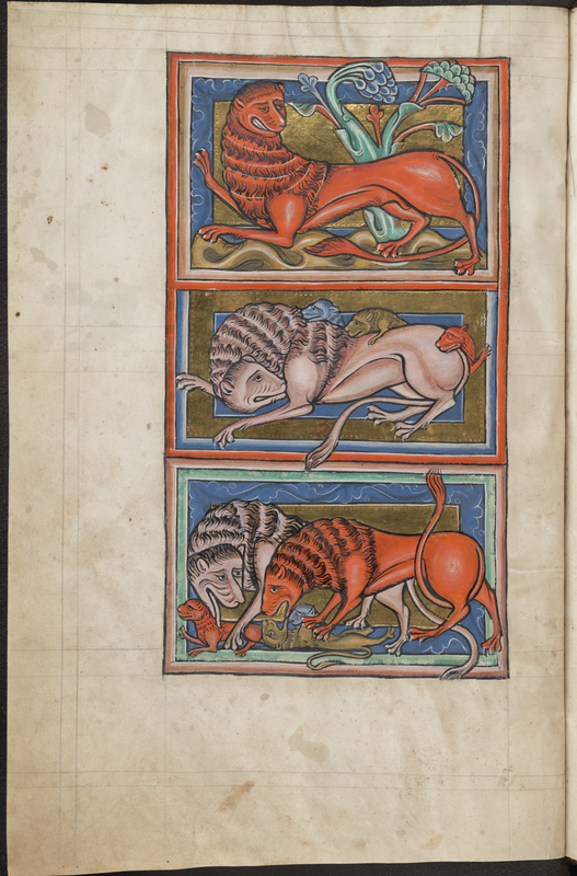 Lions from Bestiary, about 1225–1250, English. Parchment, 11 5/8 × 7 1/2 in. The Bodleian Libraries, University of Oxford, MS. Bodl. 764, fols. 2v-3r