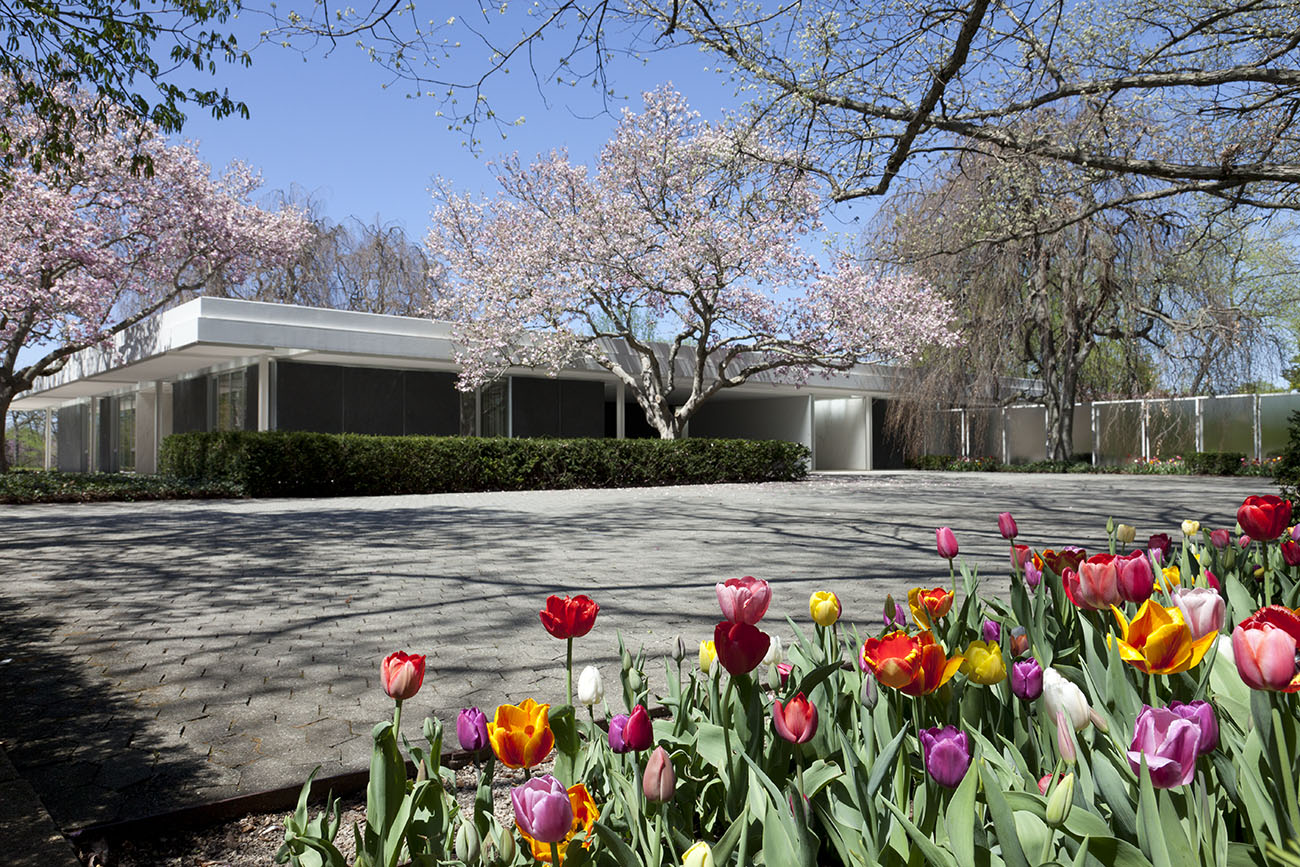 A one story white building is in the back, with a wide paved area between it and the bed of tulips in the foreground.