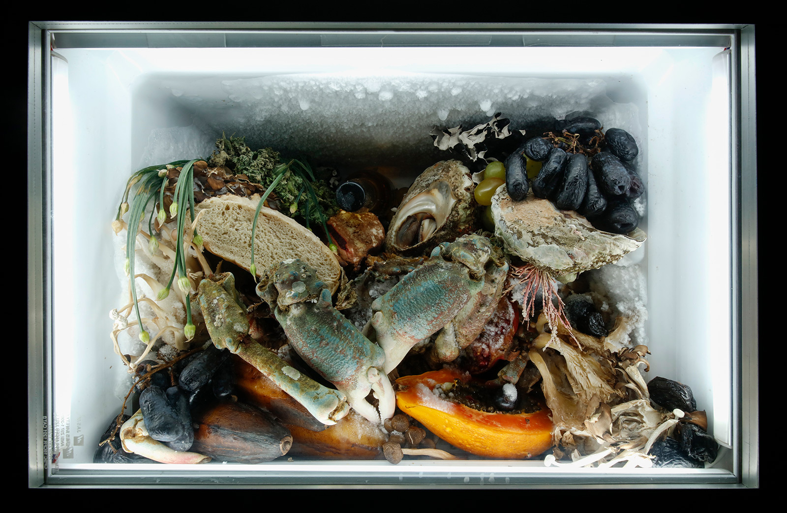 A container of crab and/or lobster claws, seashells, seaweed, etc.