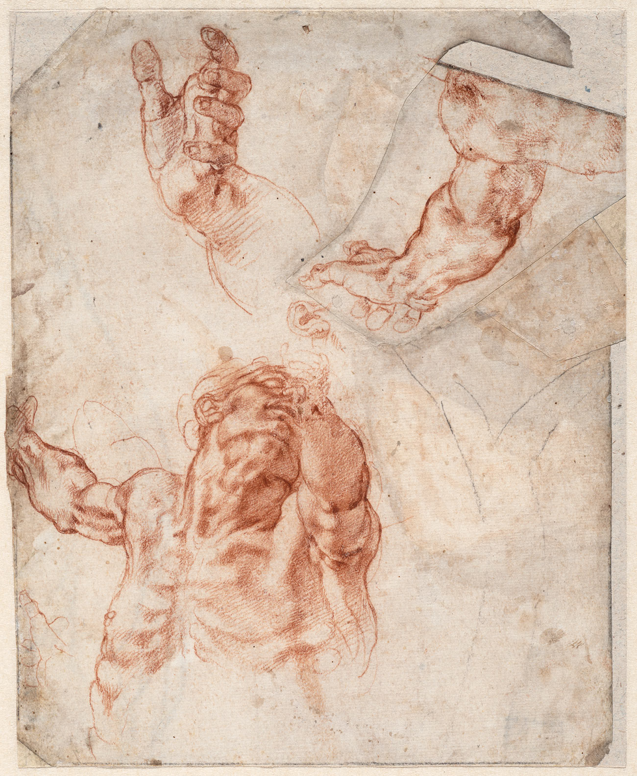 Anatomical sketches of arm, hands, ear, upper body of man