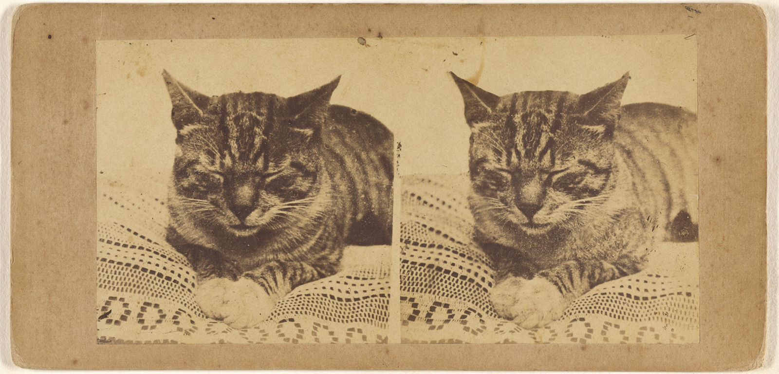 Side by side images of a tabby cat resting on a lace-covered pillow or cushion with eyes closed.