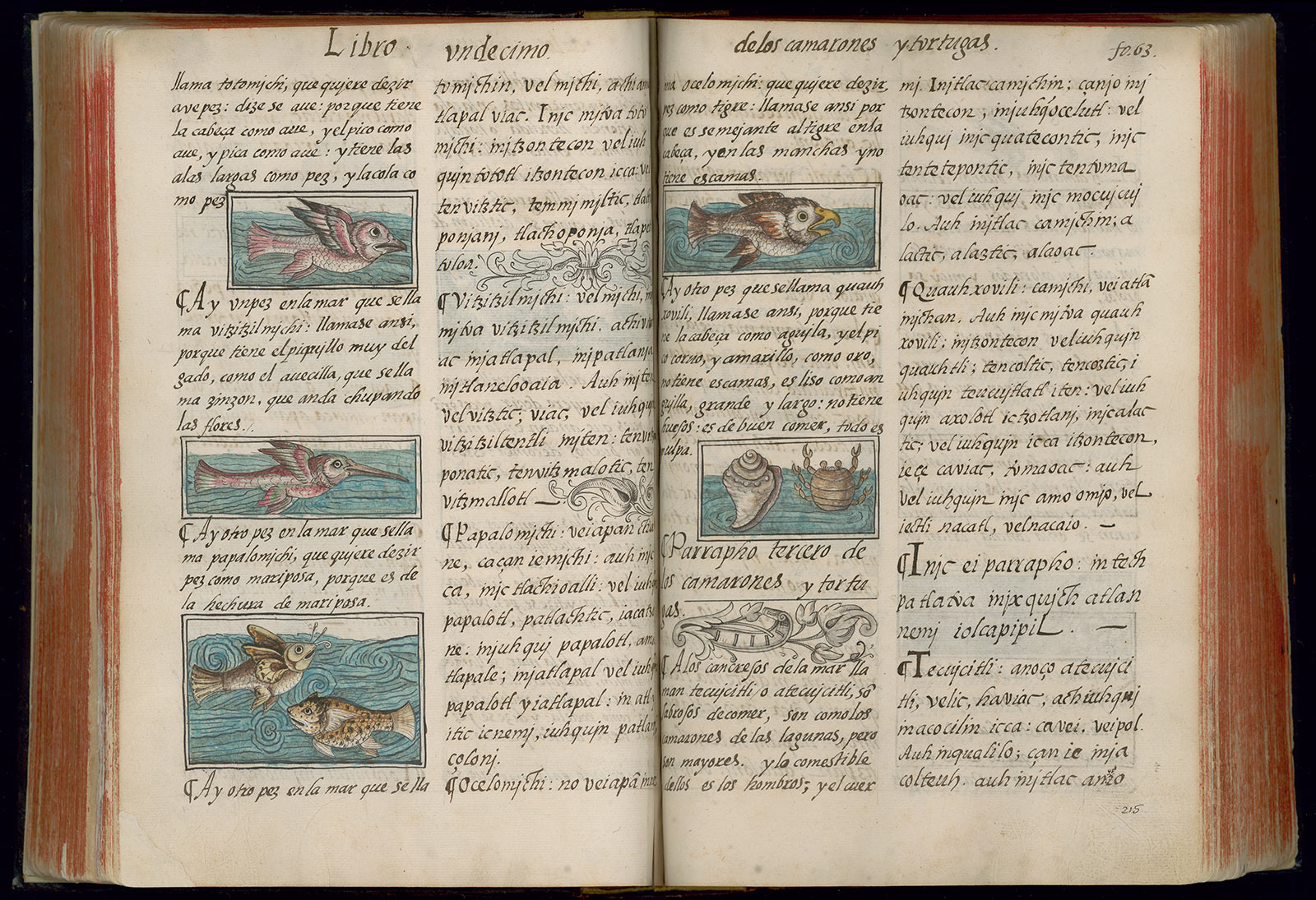 An opened book showing text on both pages with illustrations of fish.