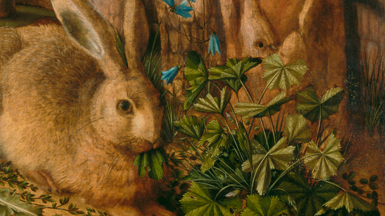 A brown rabbit with long ears muches on leaves from a brilliant green plant.