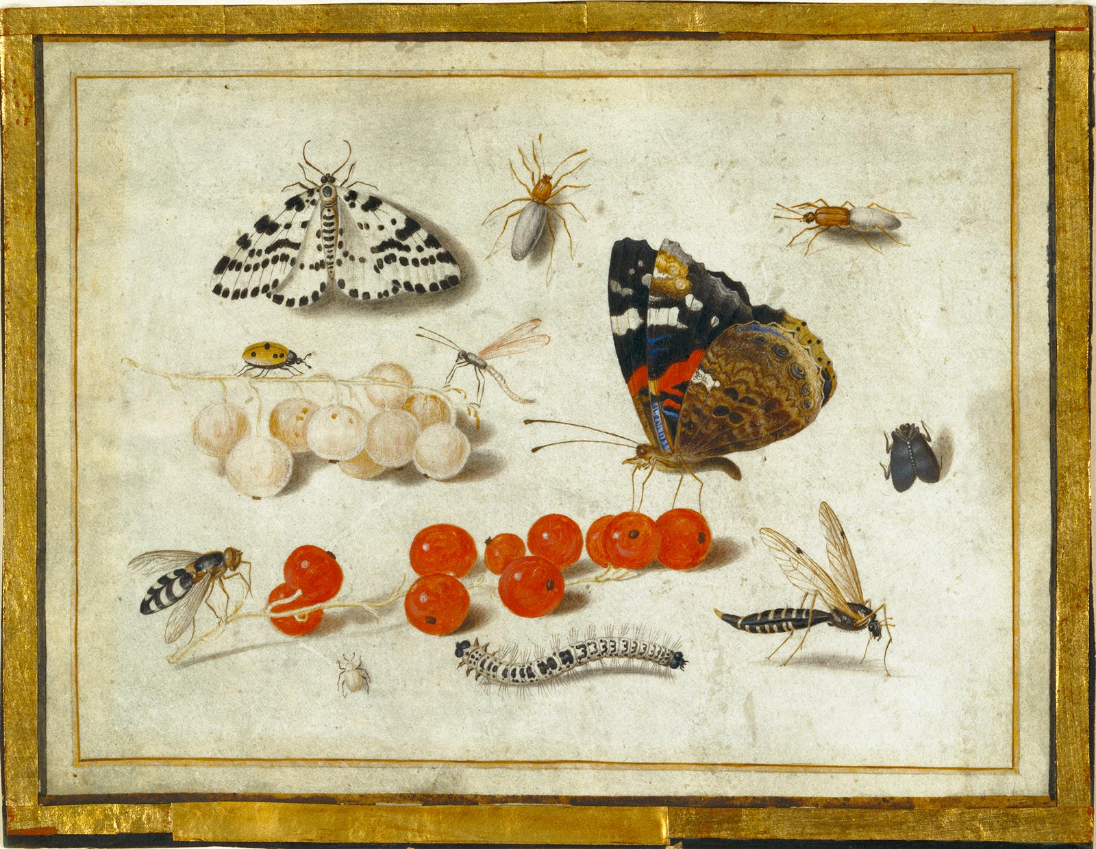 Illustration of 2 butterflies, 8 bugs, and berries, both red and white.