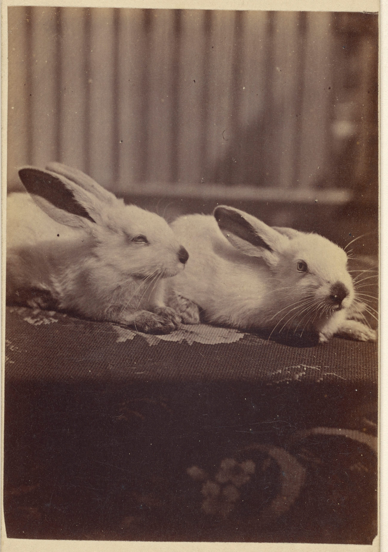 Two white rabbits laying on a cushion.