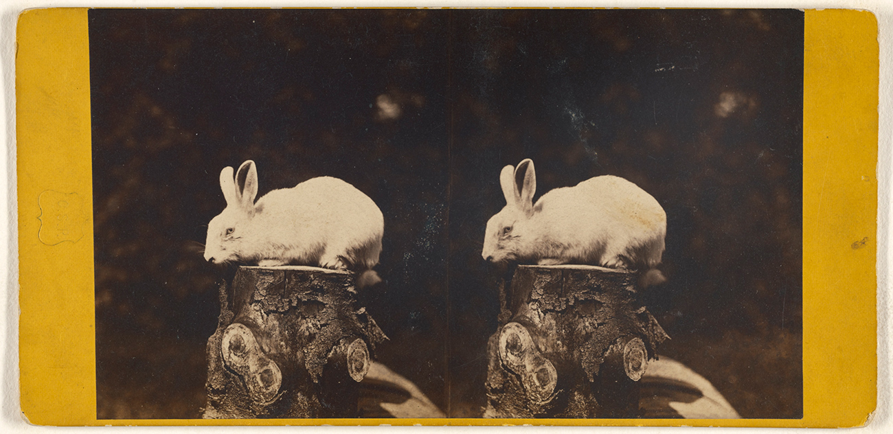 Side by side photos of white rabbit sitting on a tree stump