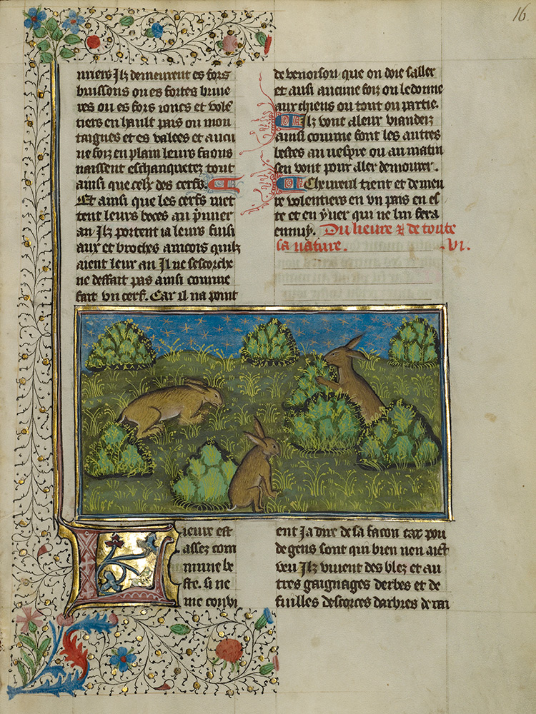 Manuscript page with three bunnies eating grass in a field with puffy bushes.