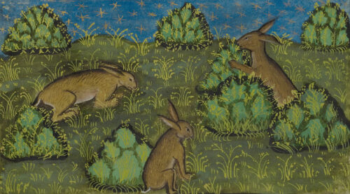 Burrowing through Getty's Online Collection in Search of Cute Bunnies