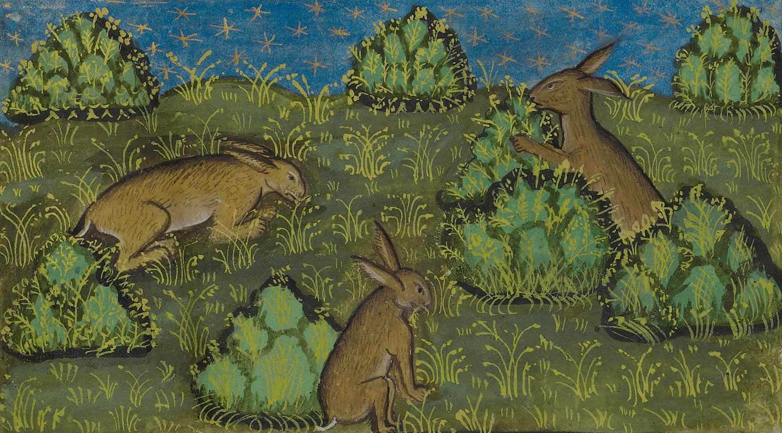 Illustration of three bunnies in a field with puffy bushes