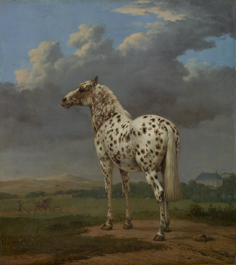 Heavily spotted horse seen from behind as it looks towards the distant horizon