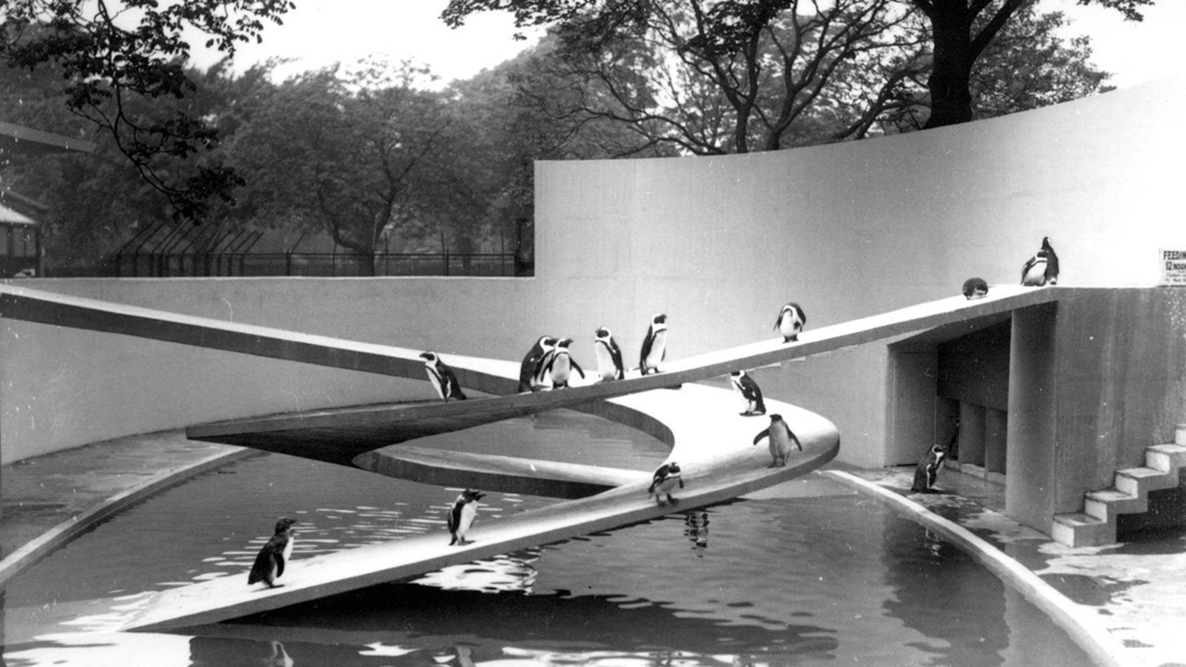 Penguins stand on curved ramps above water.
